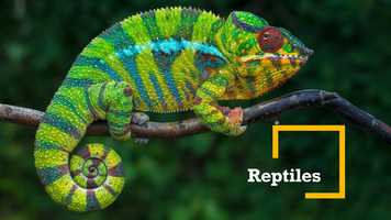 Free download 6b4 Reptiles (no voice) video and edit with RedcoolMedia movie maker MovieStudio video editor online and AudioStudio audio editor onlin