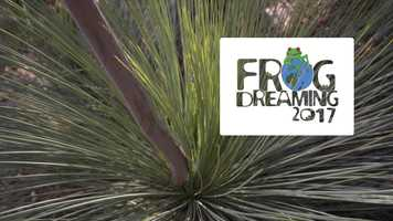 Free download Frog Dreaming 2017 video and edit with RedcoolMedia movie maker MovieStudio video editor online and AudioStudio audio editor onlin
