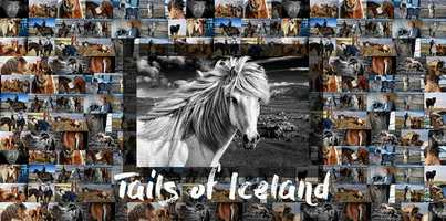 Free download Tails of Iceland - Reykjavik Premiere video and edit with RedcoolMedia movie maker MovieStudio video editor online and AudioStudio audio editor onlin