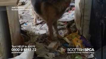 Free download Scottish SSPCA TV Campaign video and edit with RedcoolMedia movie maker MovieStudio video editor online and AudioStudio audio editor onlin